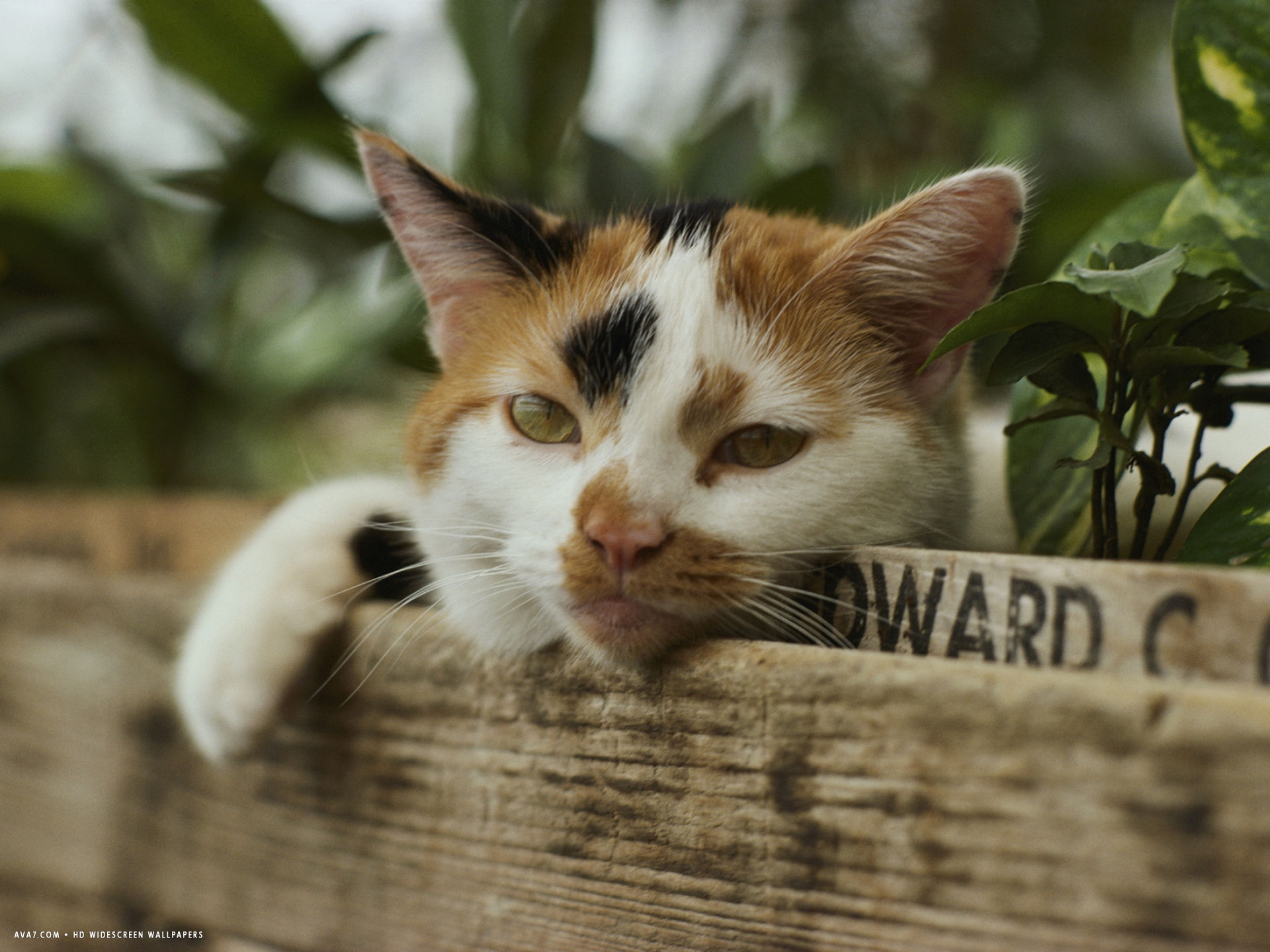 calico cat with his head resting on flower box in a green house