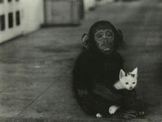 monkey and cat vintage photo