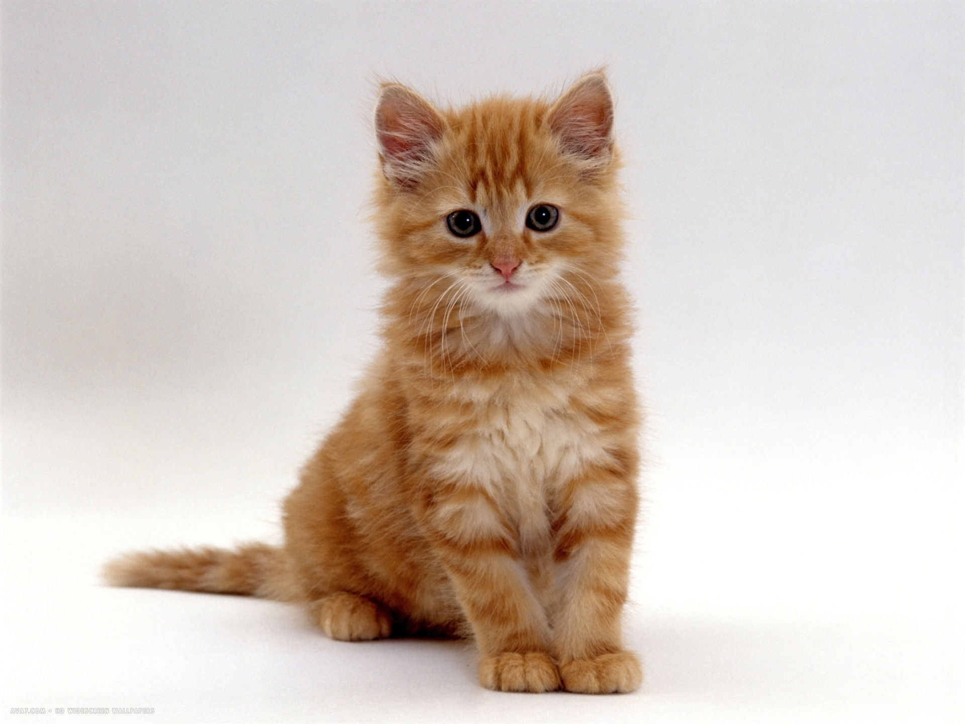 Ginger Cat Names Boy