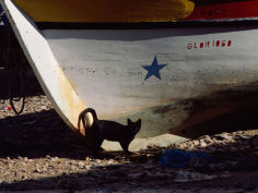 a black cat stands next to the bow of a painted wooden fishing boat