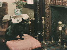 a cat is perched on an ottoman in front of a fireplace