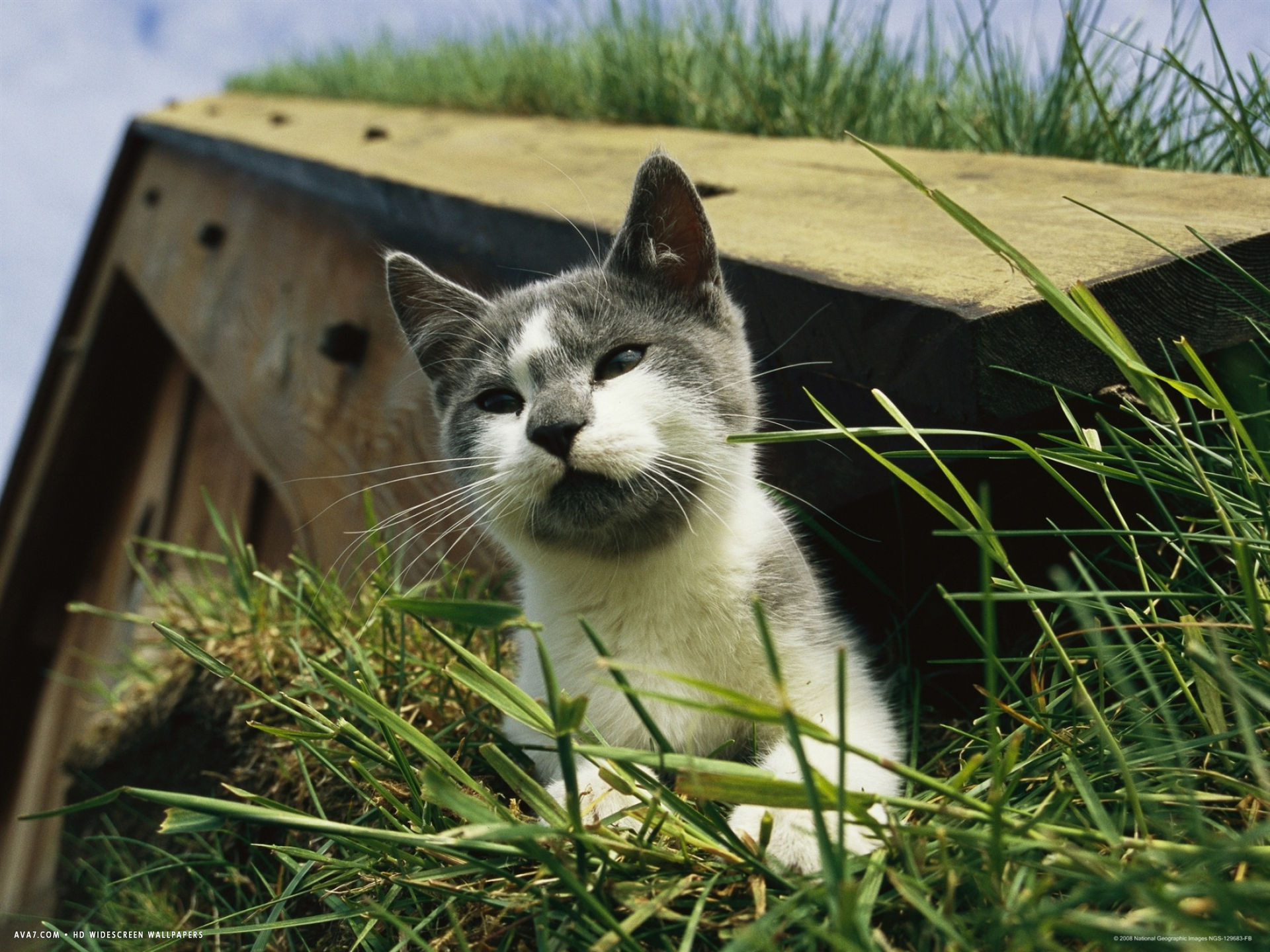 a cat perches on a sod covered roof