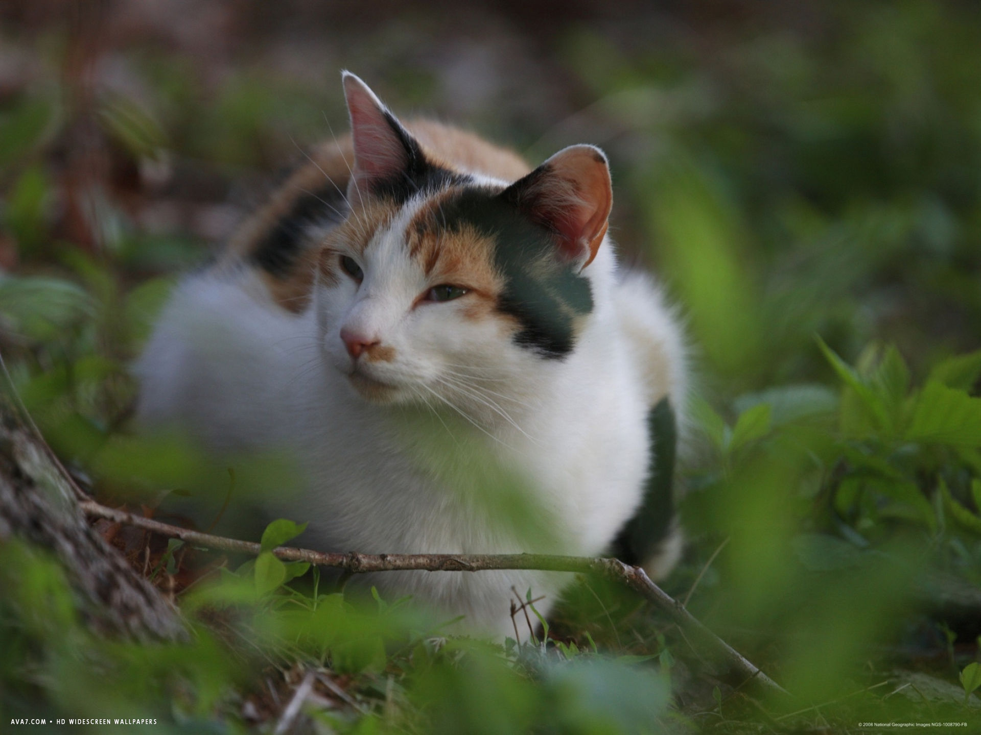 a cat sits in the grass