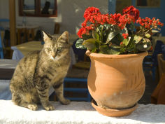 a cat sits on a white stucco wall next to a potted kalanchoe plant