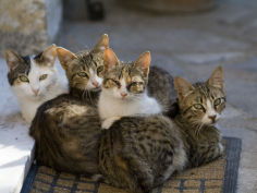 a group of four kittens sit on a mat