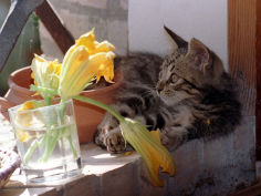 a kitten playing with flower