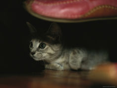 a kitten watches curiously from underneath a shoe