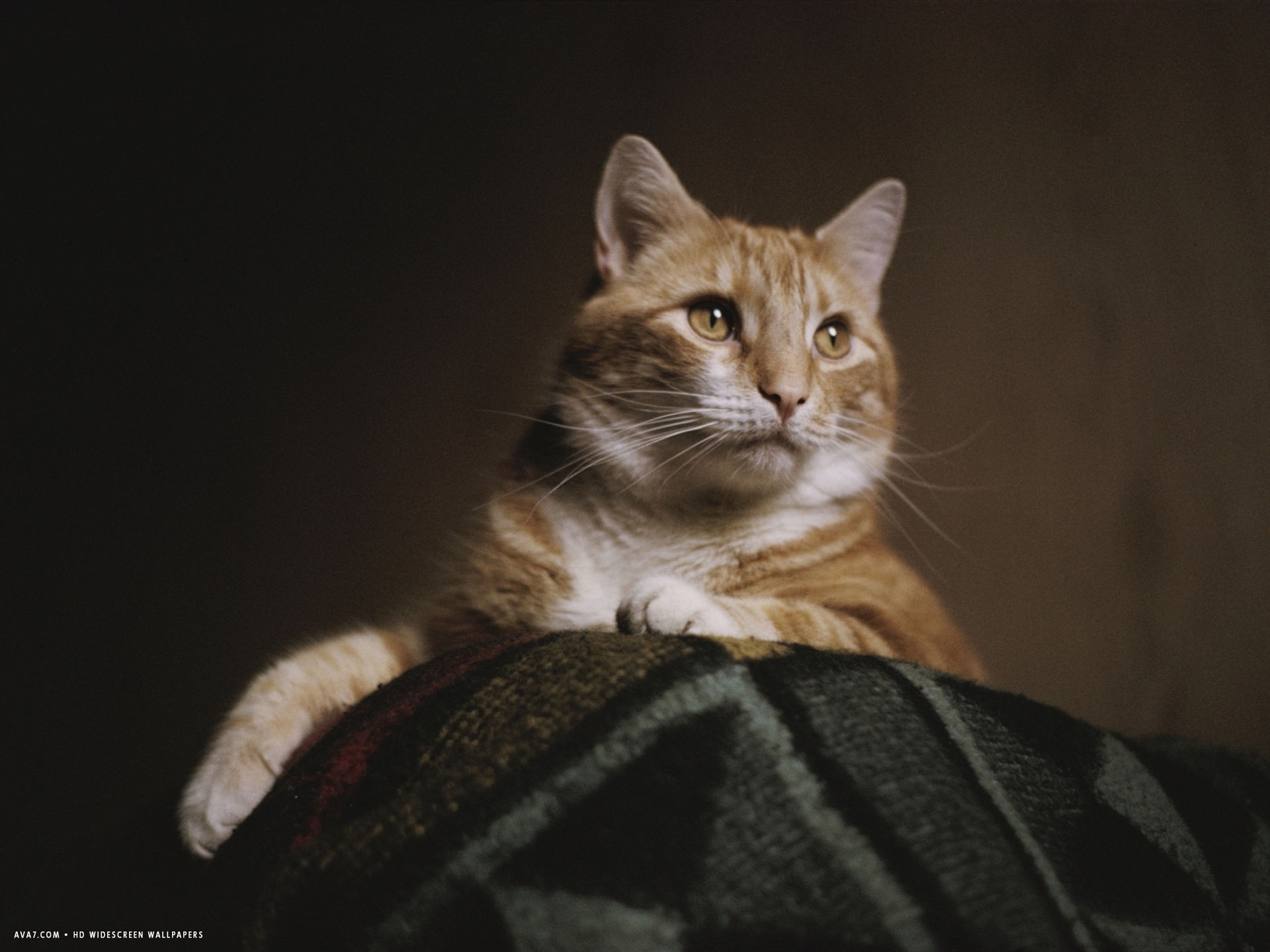 a large orange cat guards the corner of a bed