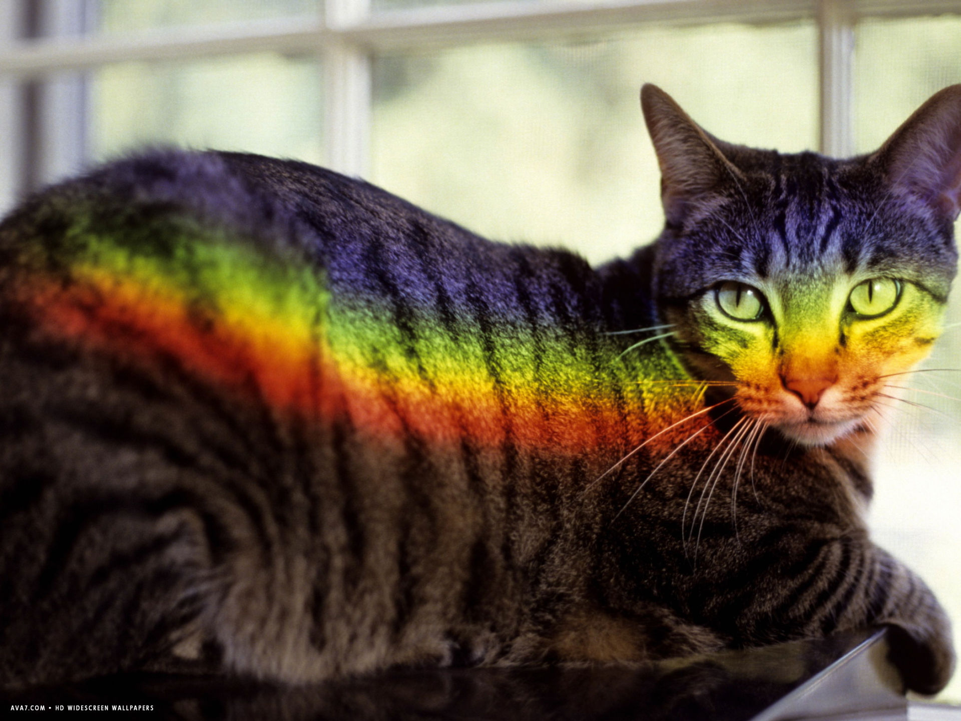 a window prism projects on a relaxed tabby cat like a private rainbow