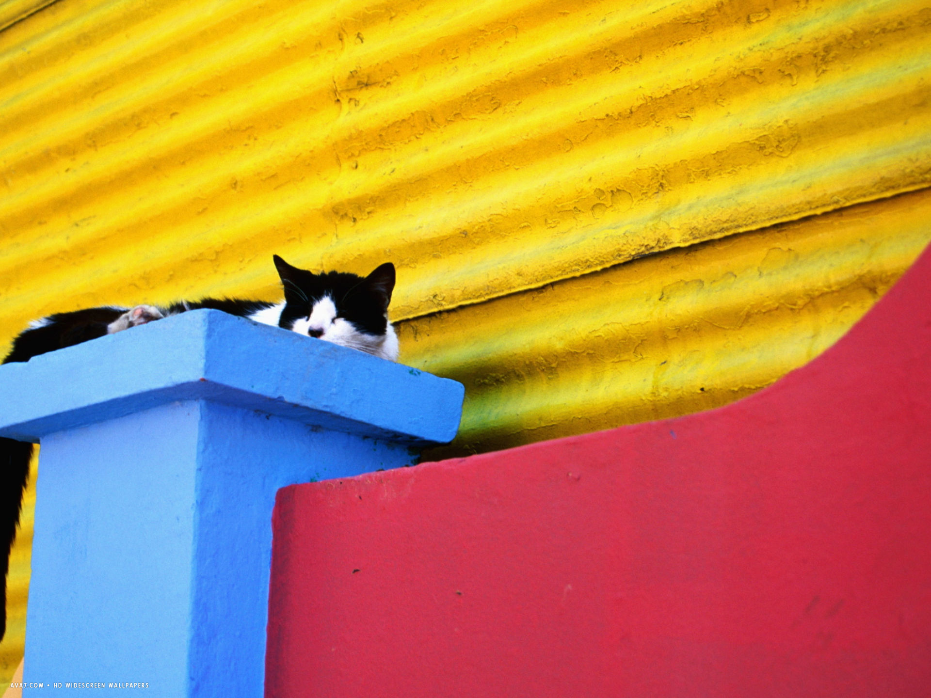andrew bain cat sleeping in barrio la boca