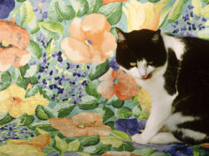 black and white cat sitting on a floral chair