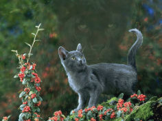 black domestic cat kitten on garden wall with black jaguar leopard shadow in background