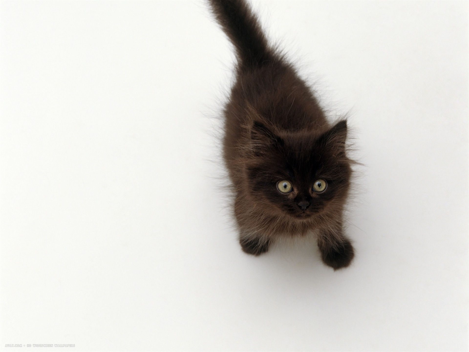 black fluffy kitten looking up viewed from above
