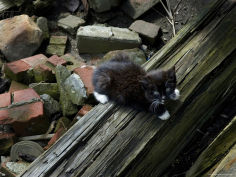 black kitten perched on a log