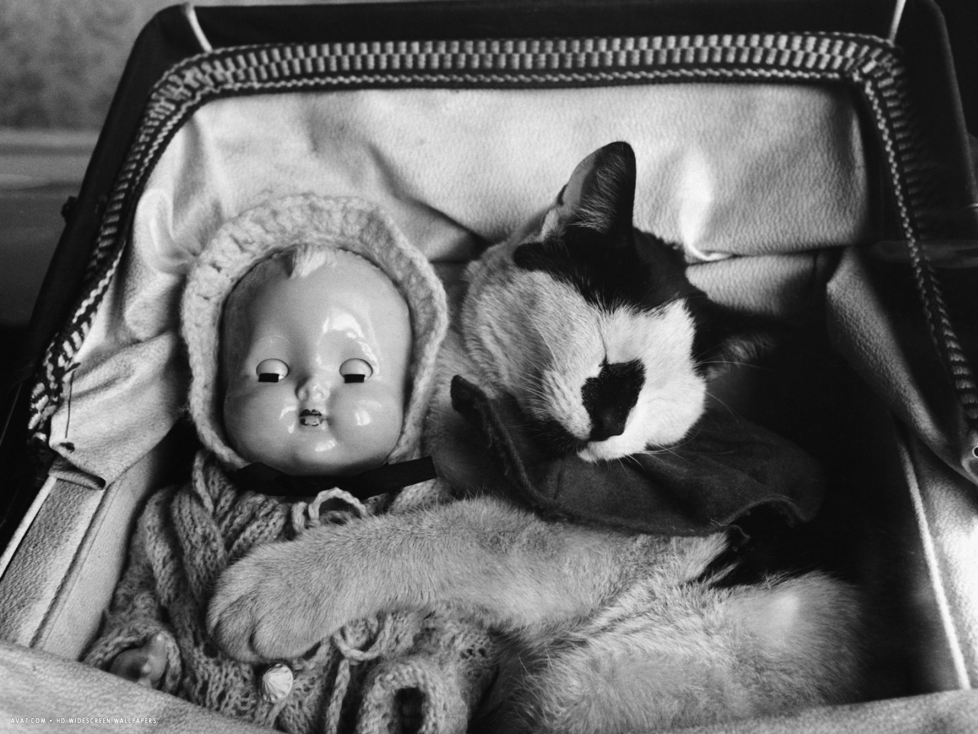 cat asleep in a pram