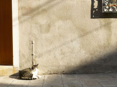 cat napping in sunshine in front of door