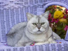 cat on lavender wicker