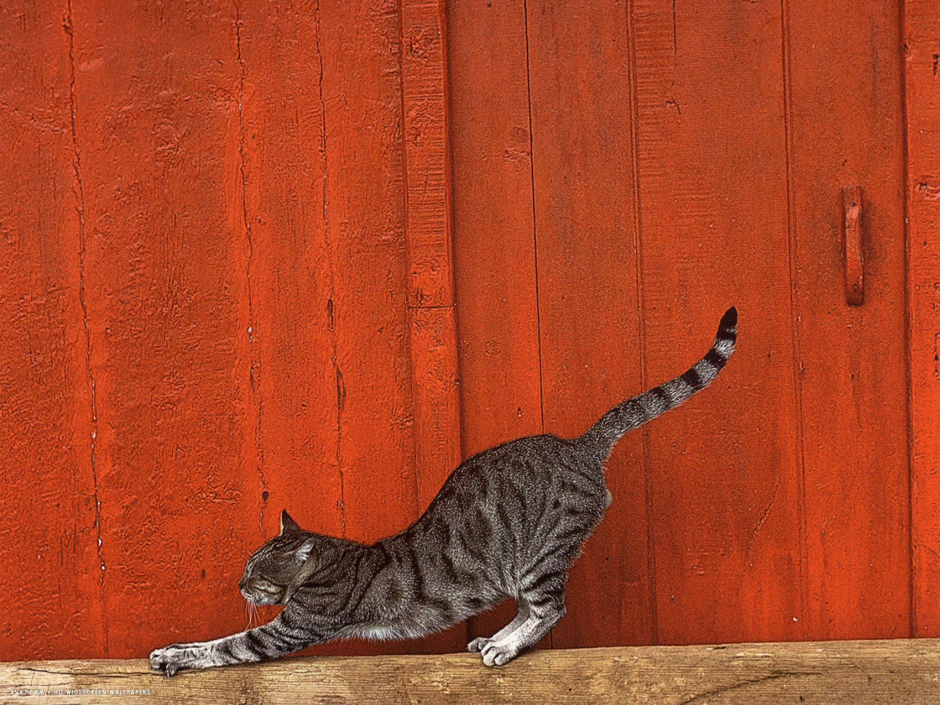 cat orange background
