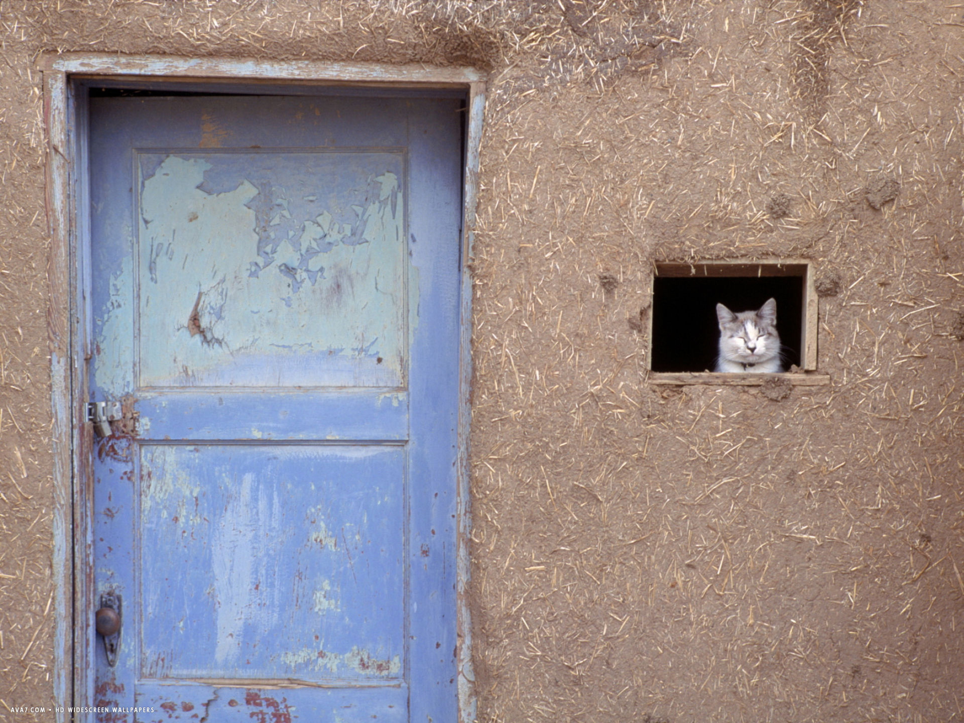 cat peers out of the window of an adobe house