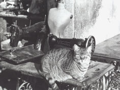 cat sewing machine and manikin