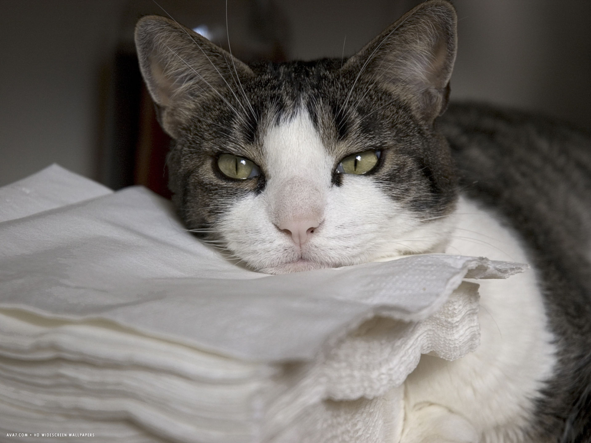 cat sleepily rests its chin on a stack of napkins