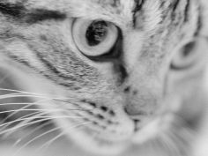 close up of cats face desktop wallpaper