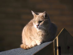 domestic cat sat in sun on shed roof