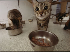 domestic cats feeding at a nutritional center