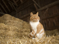 farm cat sitting on a bale of straw massachusetts