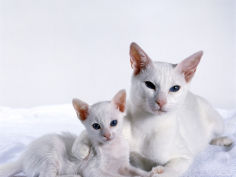 female foreign white with kitten