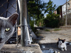 feral cats roam the streets of baltimore