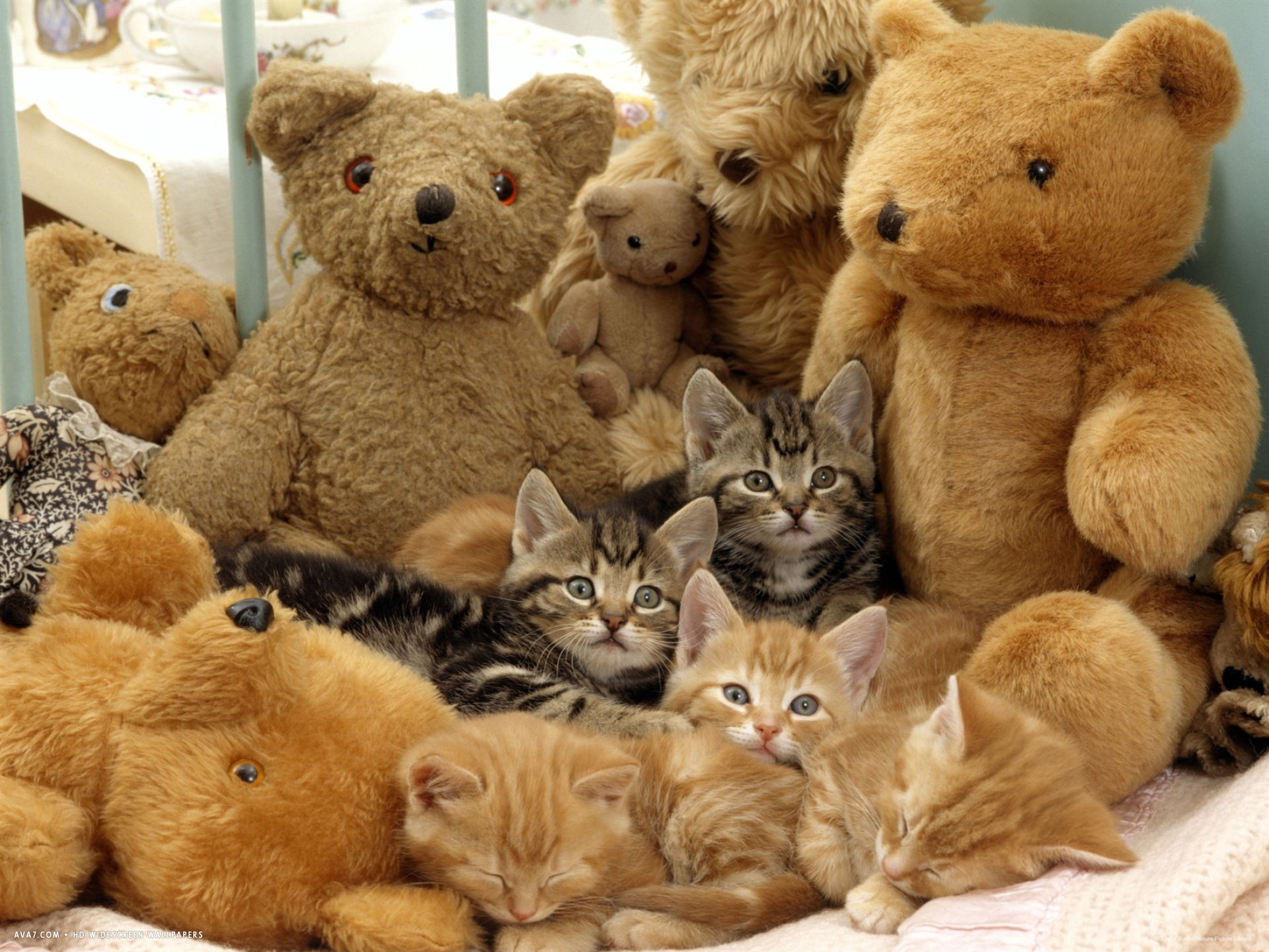 five kittens in cot with teddy bears
