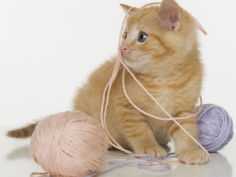 kitten playing with ball of yarn