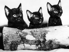 kittens hiding behind log