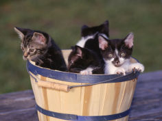 kittens in basket outdoors