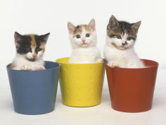 kittens in flower pots