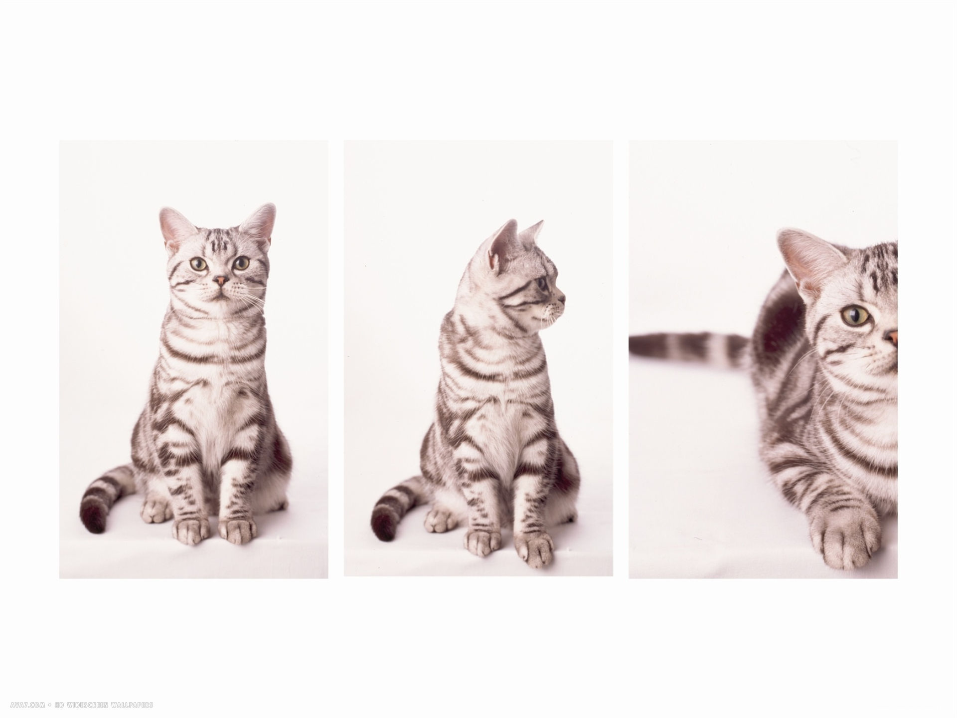 kittys approach triptych