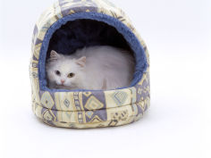 longhaired white in igloo bed