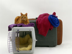 marmalade domestic cat with pet transporter carrier and suitcases