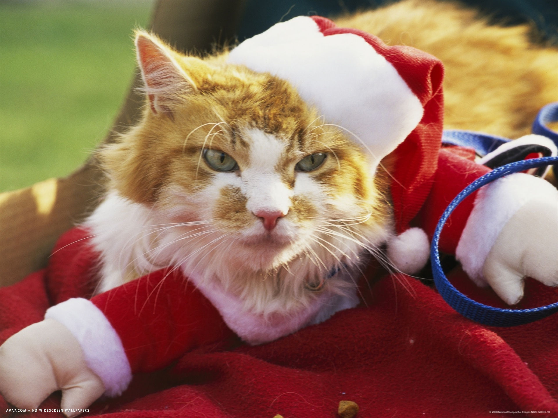pet cat dressed as santa claus during a halloween celebration