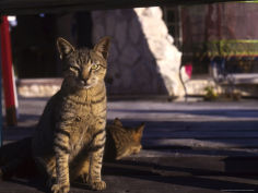 stray cats cozumel mexico