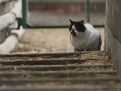studio cat in barnyard