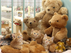 three kittens in cot with teddy bears