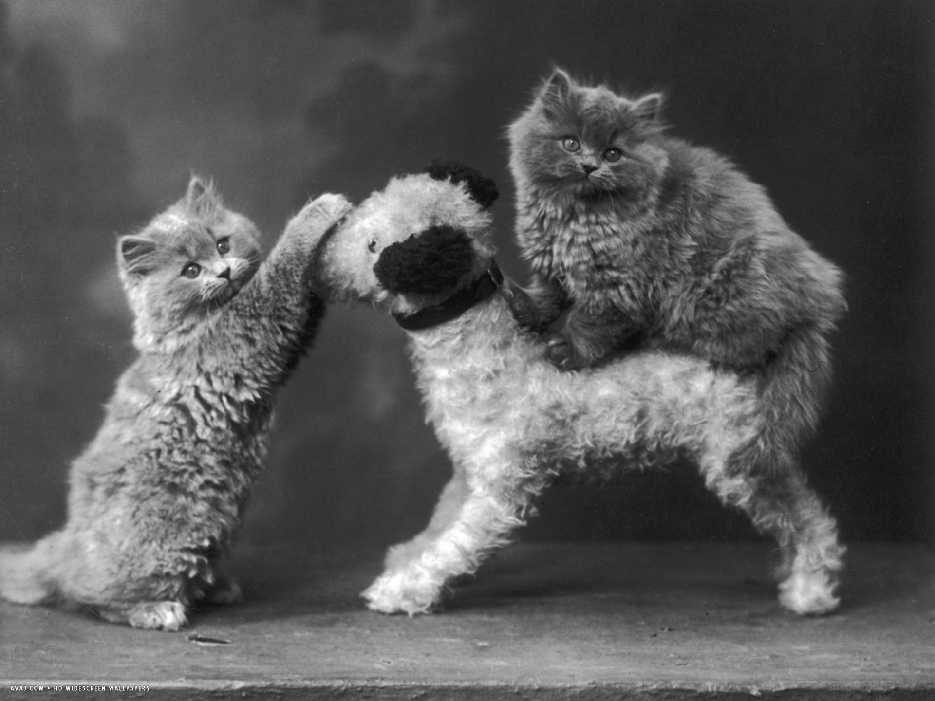 two kittens have fun with a toy dog