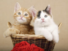 two kittens in a basket