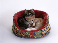 two kittens in oval bed