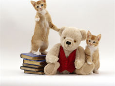two red kittens with cream teddy bear in red waistcoat