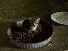 very young kitten in a barn