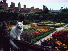 white cat perched on a fence overlooking the garden
