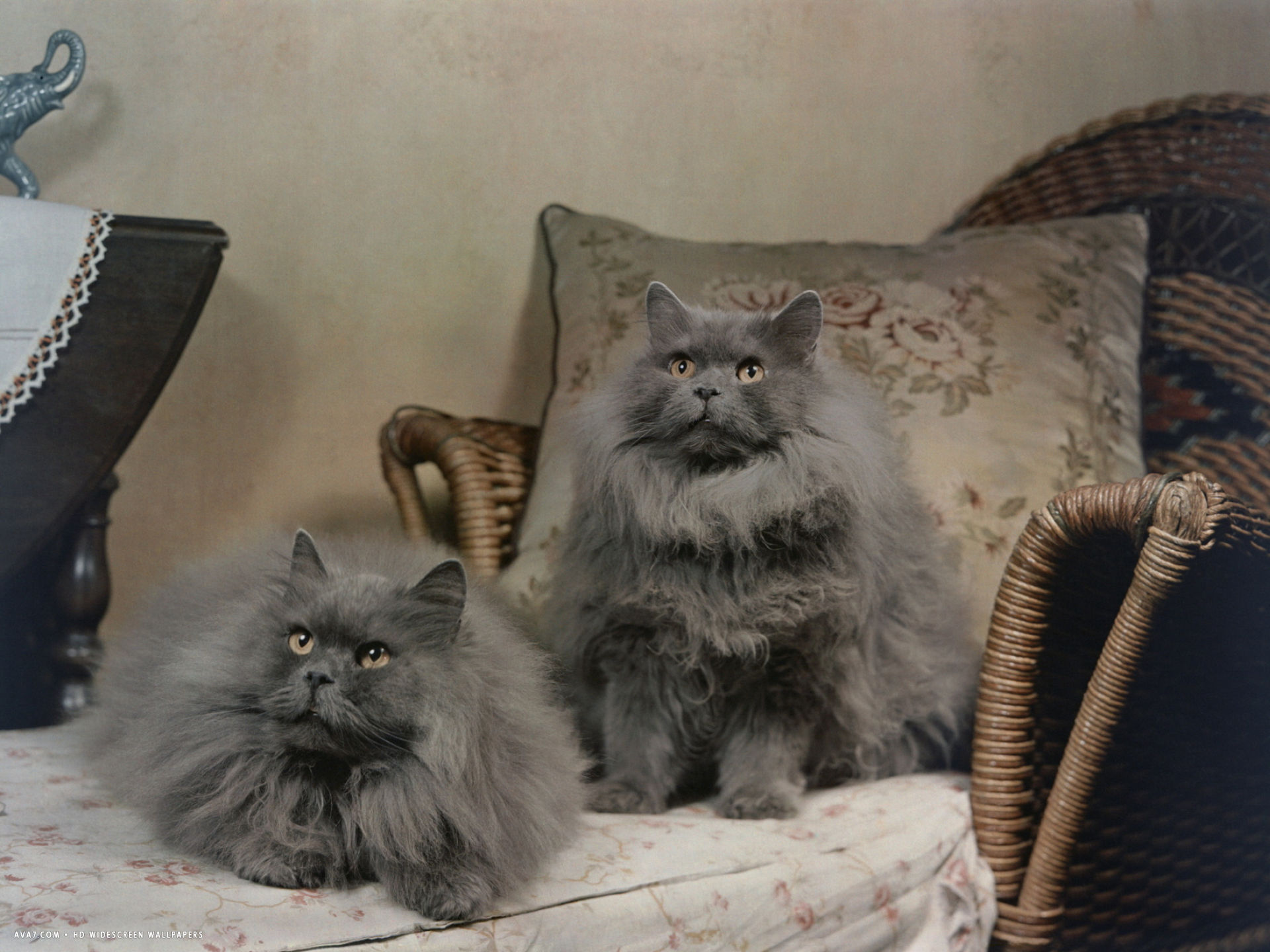 pair of blue persian cats pose on a recliner